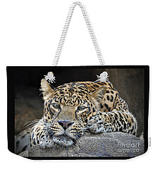Weekender Tote Bag featuring the photograph Leopard by Savannah Gibbs