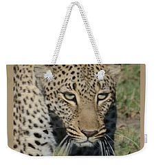 Weekender Tote Bag featuring the photograph Leopard Stalking by Tom Wurl