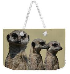 Line Dancing Meerkats Weekender Tote Bag by Paul Davenport