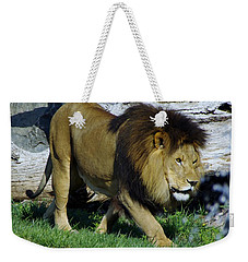 Lion 1 Weekender Tote Bag