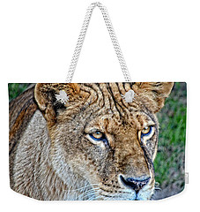Lioness Deep In Thought Hdr Weekender Tote Bag