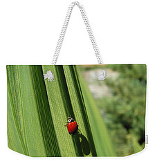 Weekender Tote Bag featuring the photograph Ladybird by Cheryl Hoyle