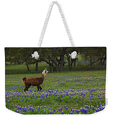 Llama In Bluebonnets Weekender Tote Bag