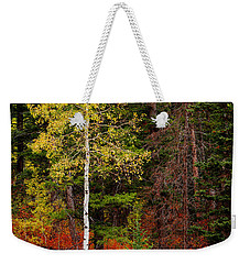 Lone Aspen In Fall Weekender Tote Bag by Chad Dutson