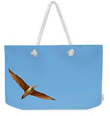 Long-billed Curlew In Flight Weekender Tote Bag