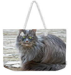 Long Haired Gray Cat Art Prints Weekender Tote Bag