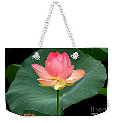 Lotus Of Late August Weekender Tote Bag