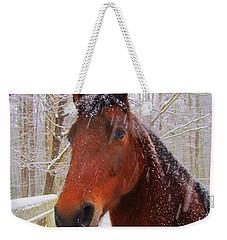 Majestic Morgan Horse Weekender Tote Bag