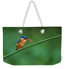 Malachite Kingfisher Tanzania Africa Weekender Tote Bag by Panoramic Images