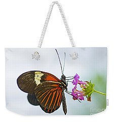 Weekender Tote Bag featuring the photograph Malay Lacewing by Nick  Boren