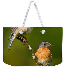 Male And Female Bluebirds Weekender Tote Bag by Jerry Fornarotto
