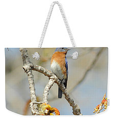 Male Bluebird In Budding Tree Weekender Tote Bag