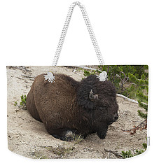 Weekender Tote Bag featuring the photograph Male Buffalo At Hot Springs by Belinda Greb