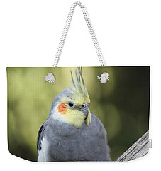 Weekender Tote Bag featuring the photograph Male Cockatiel by Judy Whitton