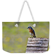 Male Eastern Bluebird Weekender Tote Bag by Lana Trussell