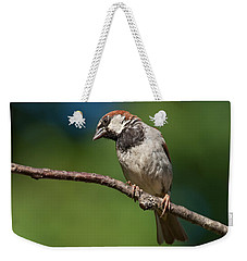 Male House Sparrow Perched In A Tree Weekender Tote Bag