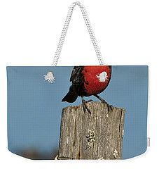 Male Long-tailed Meadowlark On Fencepost Weekender Tote Bag