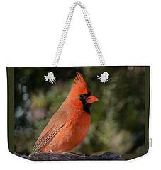 Male Northern Cardinal 3 Weekender Tote Bag