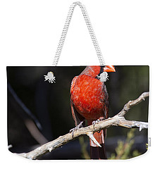 Male Northern Cardinal Weekender Tote Bag by Gary Langley