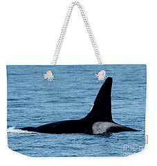 Weekender Tote Bag featuring the photograph Male Orca Killer Whale In Monterey Bay 2013 by California Views Mr Pat Hathaway Archives