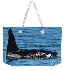 Weekender Tote Bag featuring the photograph Lonesome George Ca165  Male Orca Killer Whale In Monterey Bay California 2013 by California Views Mr Pat Hathaway Archives