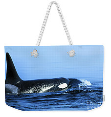 Weekender Tote Bag featuring the photograph Male Orca Off The San Juan Islands Washington 1986 by California Views Mr Pat Hathaway Archives