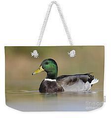 Weekender Tote Bag featuring the photograph Mallard by Bryan Keil