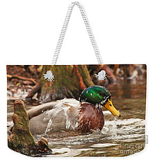 Mallard Duck Taking Bath Weekender Tote Bag by Luana K Perez