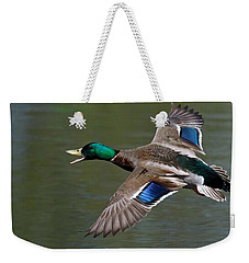 Weekender Tote Bag featuring the photograph Mallard In Flight by Jerry Gammon