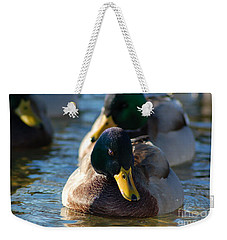 Mallard In The Morning Sun Weekender Tote Bag