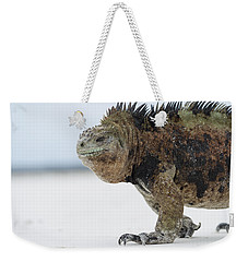 Weekender Tote Bag featuring the photograph Marine Iguana Male Turtle Bay Santa by Tui De Roy