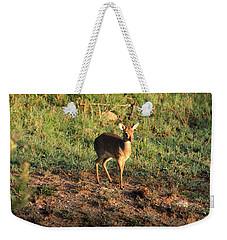 Masai Mara Dikdik Deer Weekender Tote Bag
