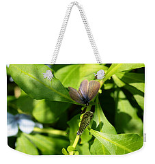 Mating Dance Weekender Tote Bag by Greg Allore
