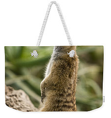 Weekender Tote Bag featuring the photograph Meerkat Mongoose Portrait by David Millenheft