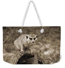 Meerkat On A Log Weekender Tote Bag by Douglas Barnard