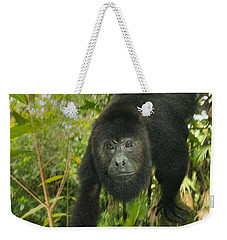 Weekender Tote Bag featuring the photograph Mexican Black Howler Monkey Belize by Kevin Schafer