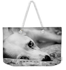 Weekender Tote Bag featuring the photograph Miss Donut  by Faith Williams