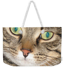 Weekender Tote Bag featuring the photograph Monty The Cat by Jolanta Anna Karolska