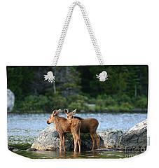 Moose Calves In Maine Weekender Tote Bag