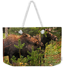 Moose Family At The Shredded Pine Weekender Tote Bag by Stanza Widen