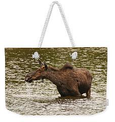 Moose In The Wilderness Weekender Tote Bag