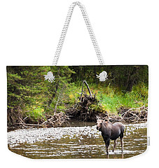 Moose In Yellowstone National Park   Weekender Tote Bag