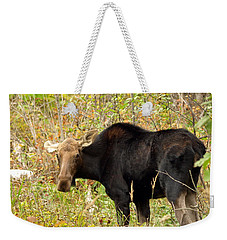 Weekender Tote Bag featuring the photograph Moose by James Peterson