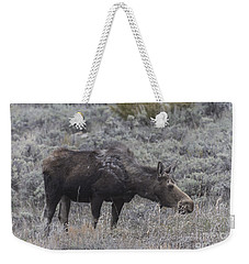 A Grazing Moose Weekender Tote Bag
