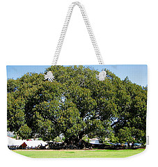 Moreton Fig Tree In Santa Barbara Weekender Tote Bag