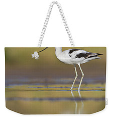 Weekender Tote Bag featuring the photograph Morning Avocet by Bryan Keil