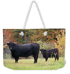 Weekender Tote Bag featuring the photograph Highland Cattle  by Eunice Miller