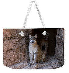 Weekender Tote Bag featuring the photograph Mountain Lion 1 by Arterra Picture Library