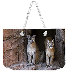 Weekender Tote Bag featuring the photograph Mountain Lion 2 by Arterra Picture Library