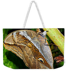Mournful Owl Butterfly Weekender Tote Bag by Amy McDaniel